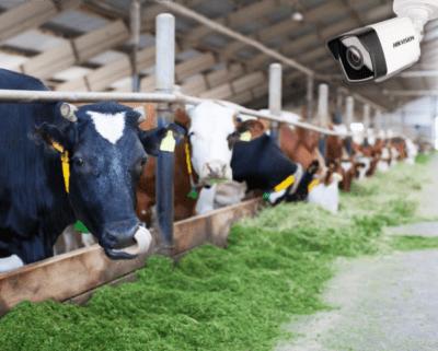 Kamery zewnętrzne nadające się do monitoringu obory: krów, trzodu chlewnej, indykow, drobiu czy pastwiska